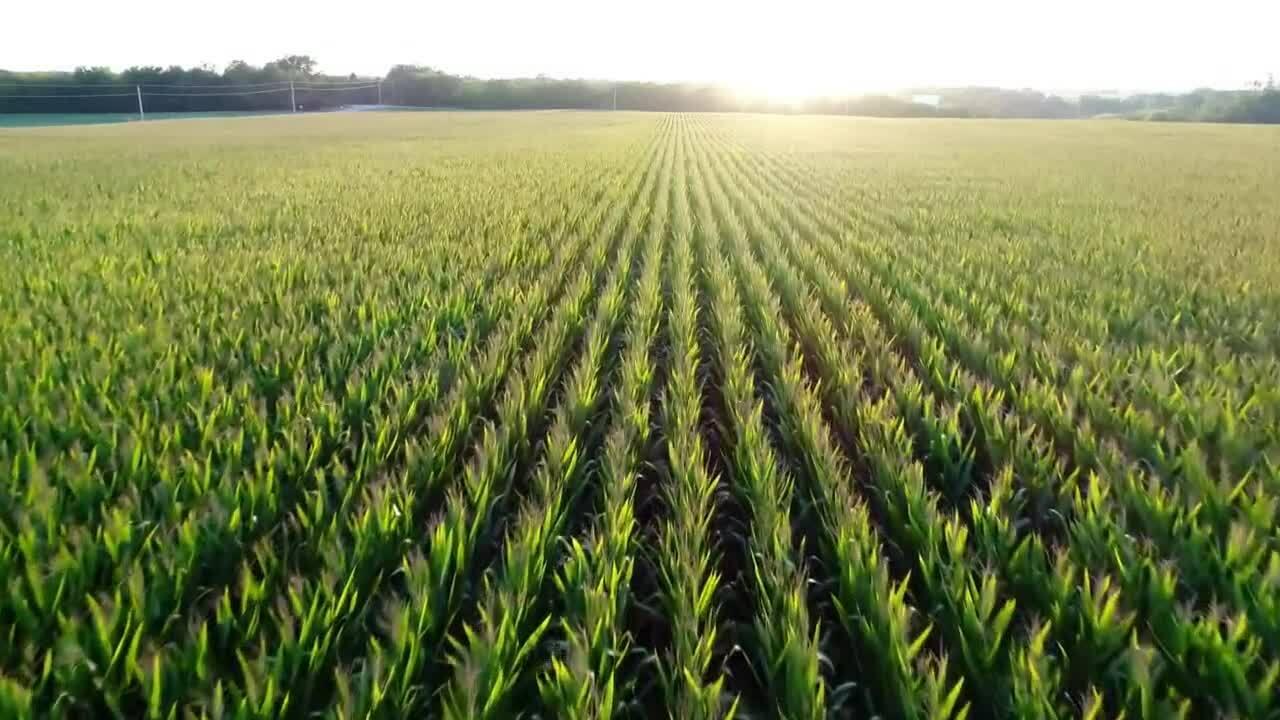 112349 Corteva Corn FINAL 10-21-19-lowres