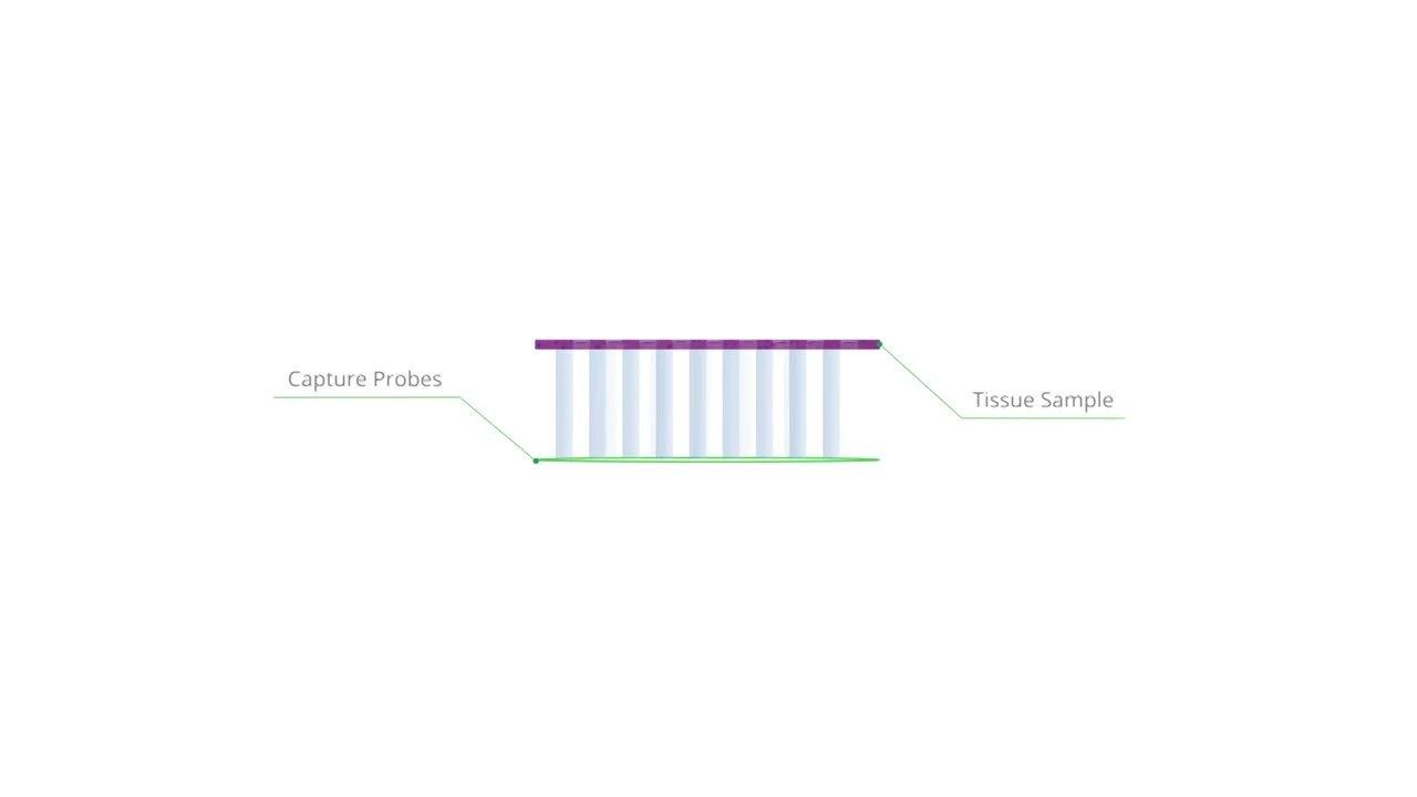 Spatialtranscriptomics - Film 2