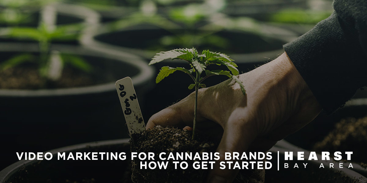Cannabis Video Marketing How to Get Started