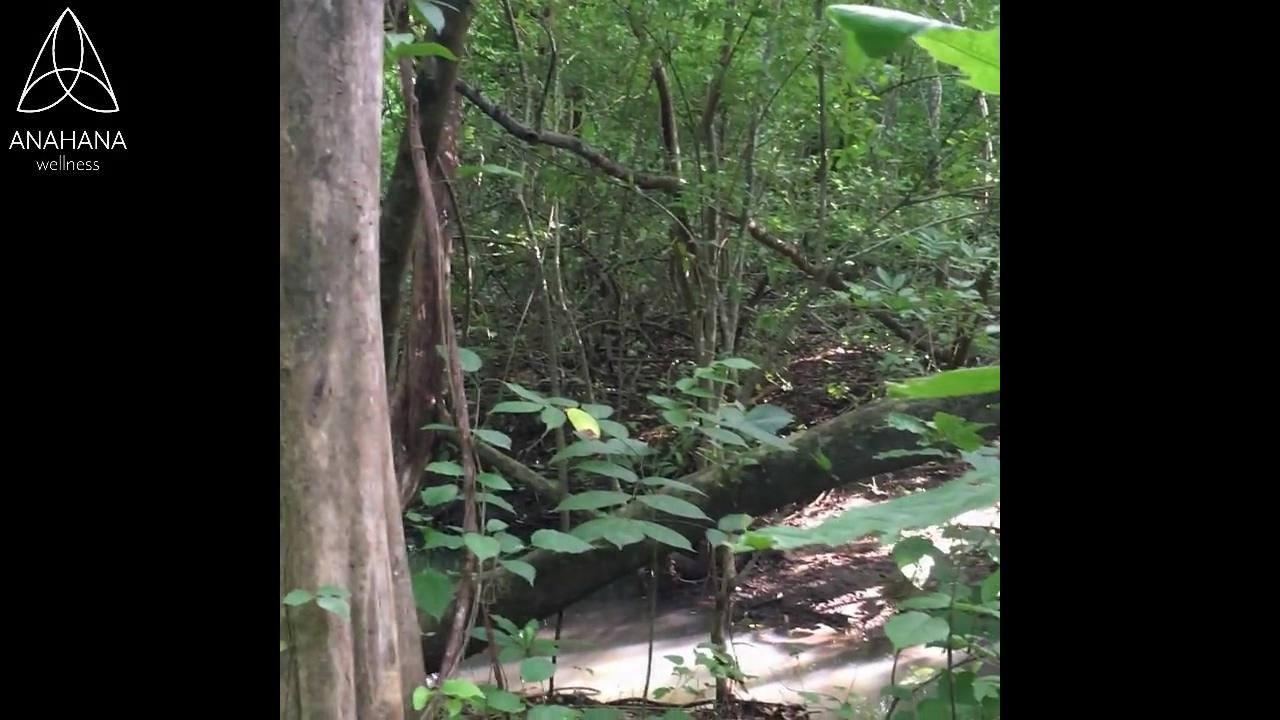 Forest-Bathing-Nicole