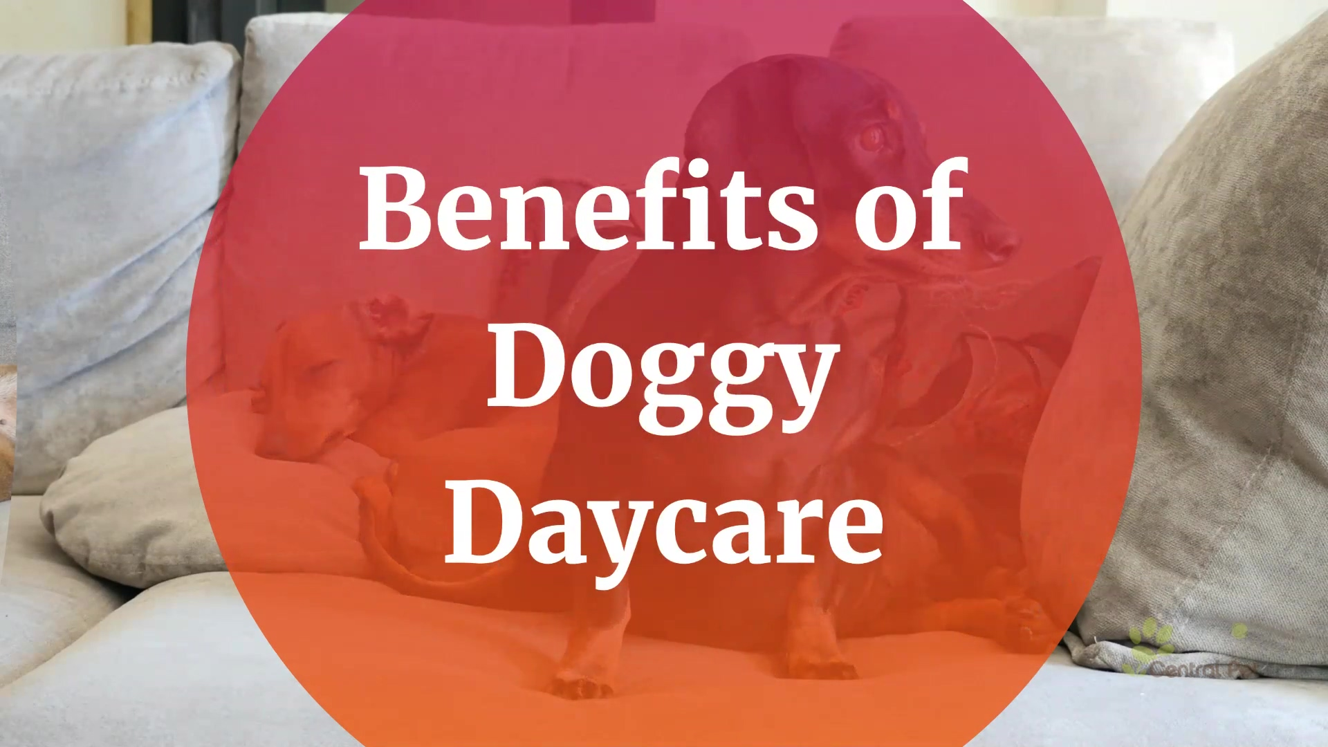 Is_Doggy_Daycare_the_Right_Choice_for_Yo
