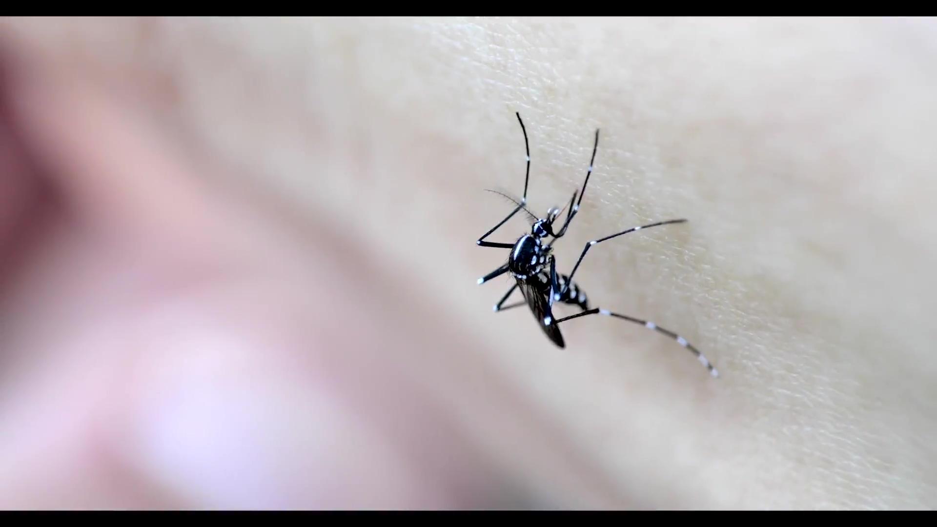 Kingstowne Pest Control - no CTA or music