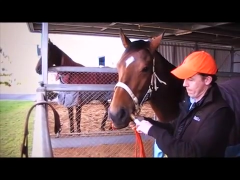 Parnell Equine Video Malay