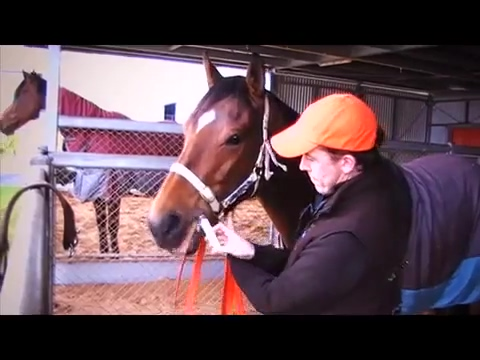 Parnell Equine Video Cantonese
