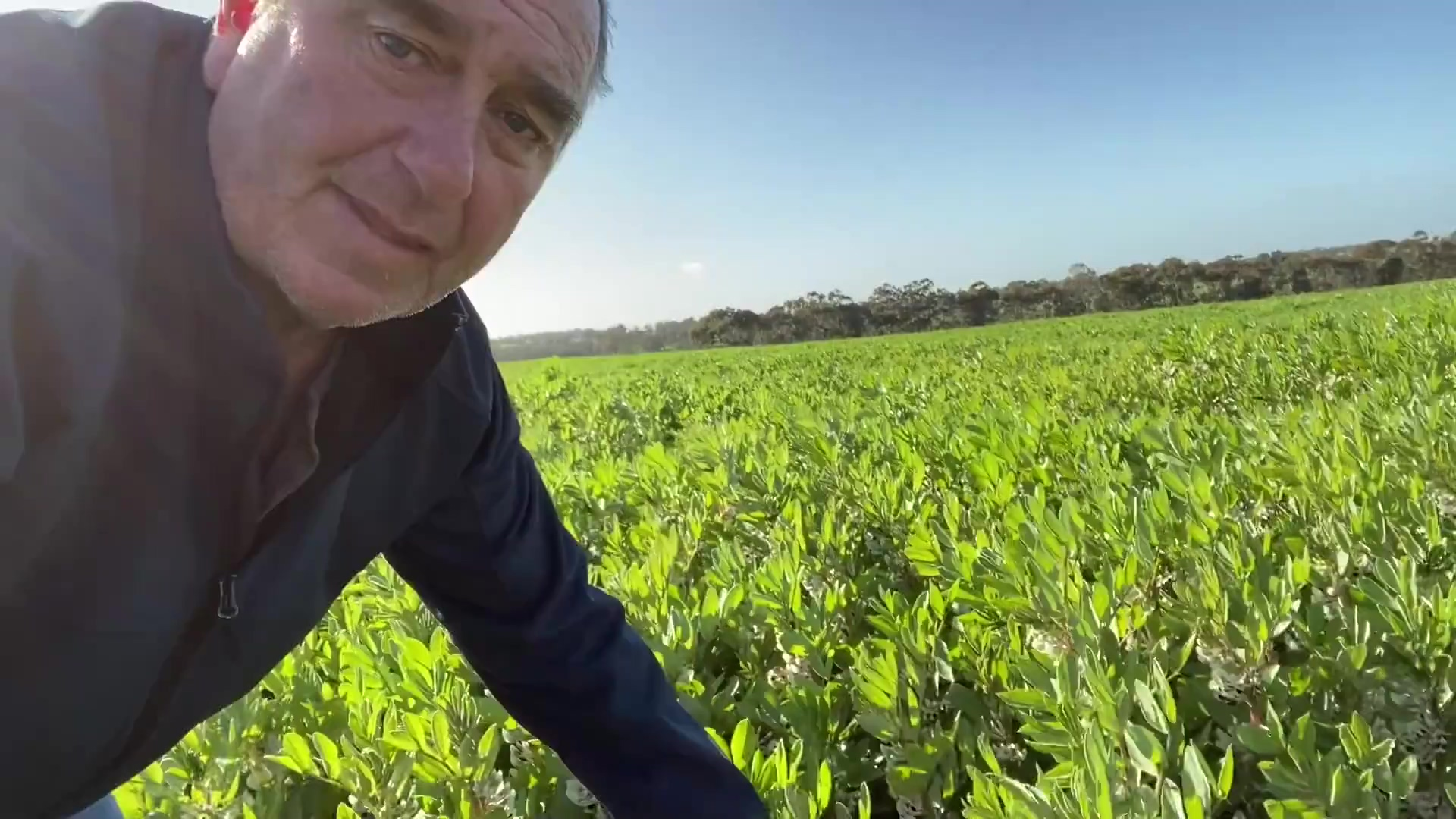 Priority Bevan Addison Faba Beans Trial FINAL 30.04.21-1