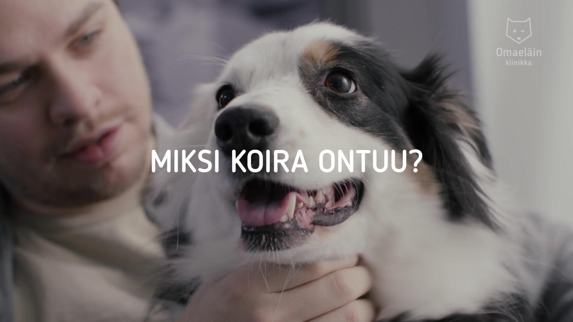 Omaeläinklinikka – Miksi koira ontuu?