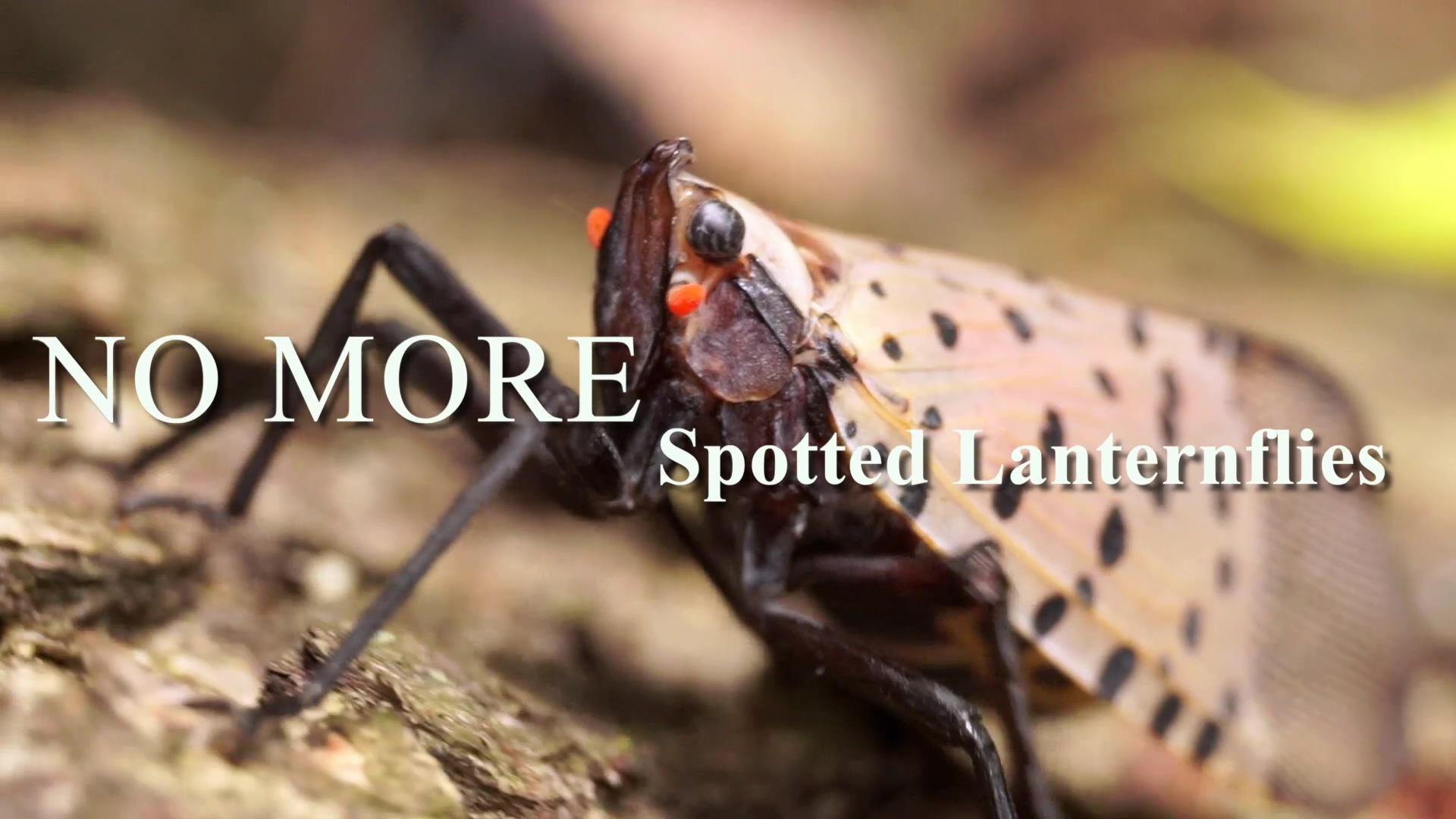 JT - Spotted Lanternfly