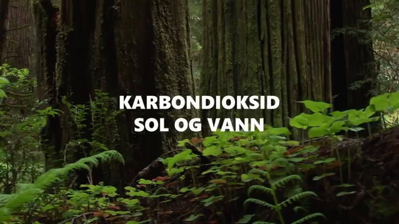 Vann07-1