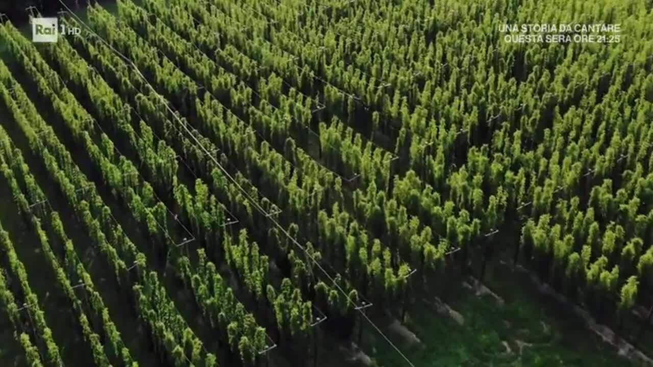linea verde radici solo Teo_X_birra_Baladin