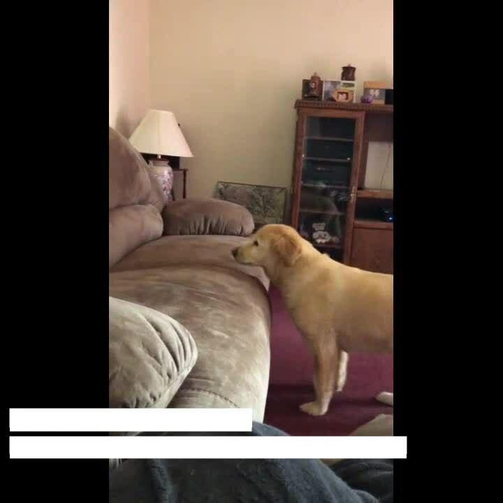 Testimonial Video  Daisy 2 update