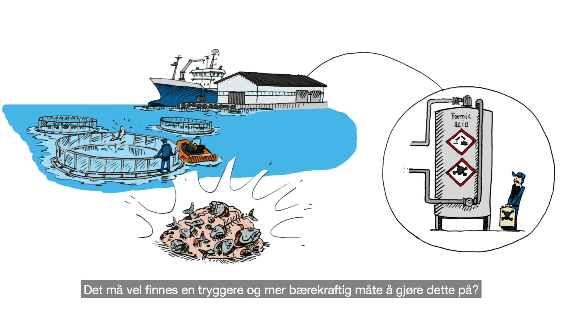 Tryggere og miljøvennlig produksjon av fiskeensilasje