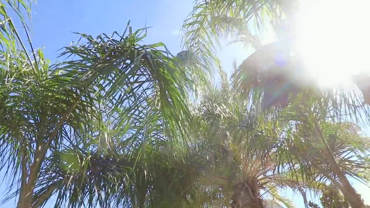So You Bought A Palm Tree - CA