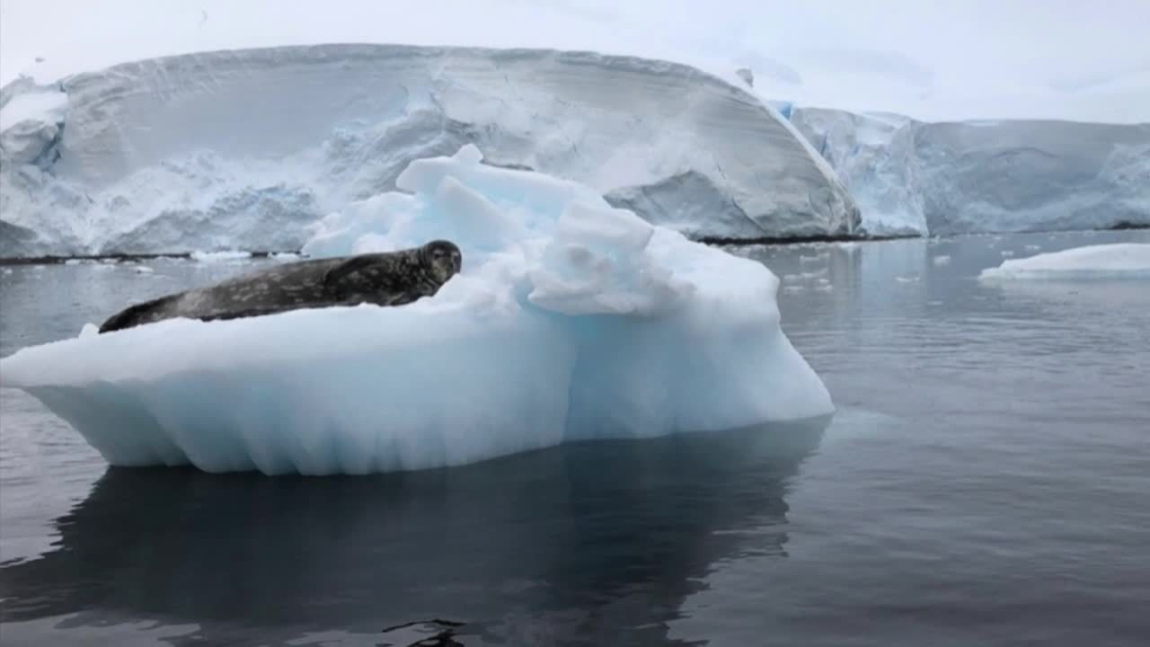 Antarctica 2019 - Damoy Point
