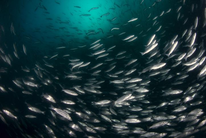 Aquaculture Final