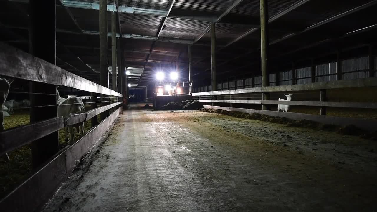 Scraping feed off the floor
