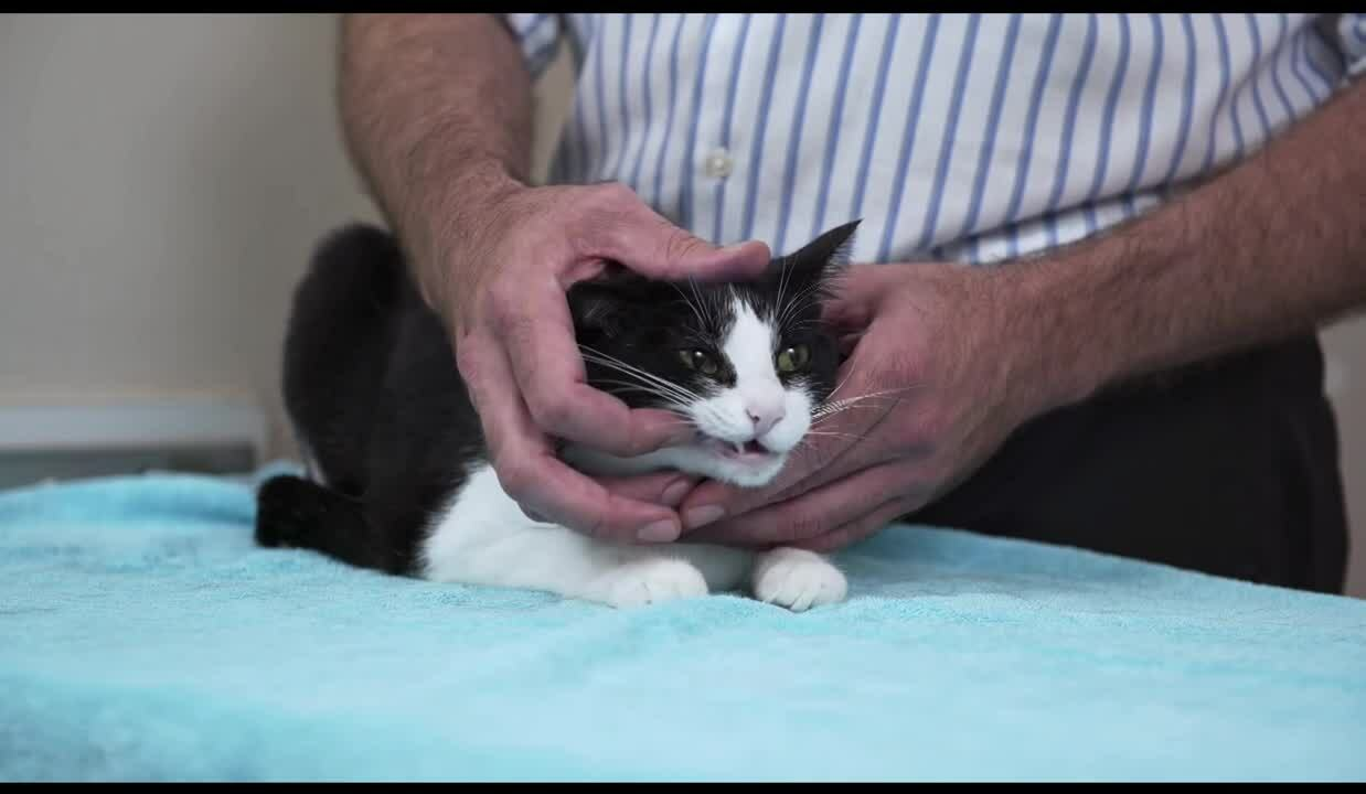 Cats teeth massage
