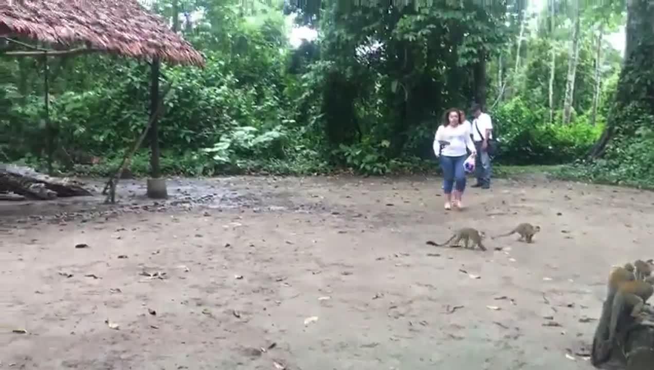 Tour rio Amazonas + micos (38)