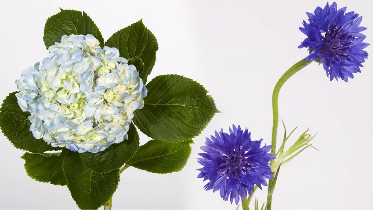 Flower Trends Forecast 2019- The Believer