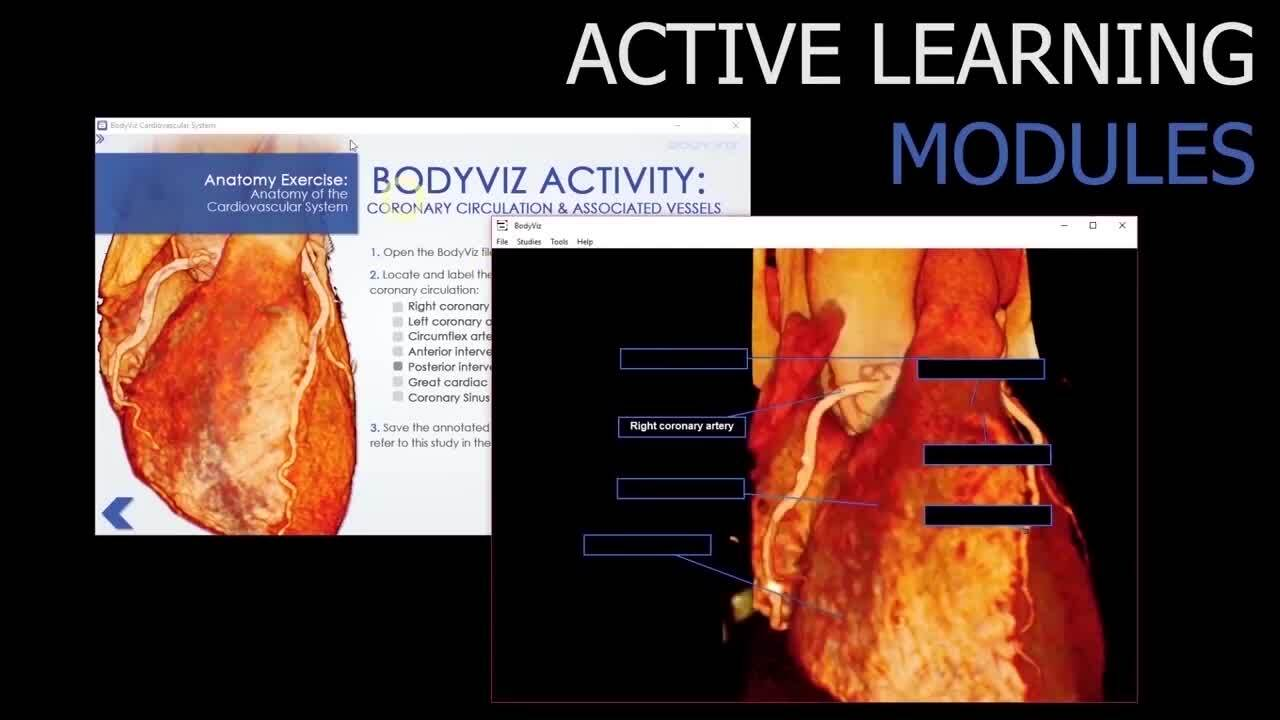 Interactive Anatomy Content Features