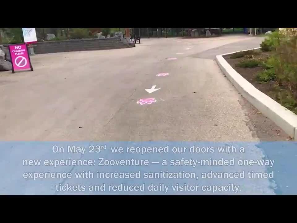 ExampleCard_Video_CalgaryZoo