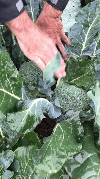 Dan Solomon- Harvesting at Optimal Times