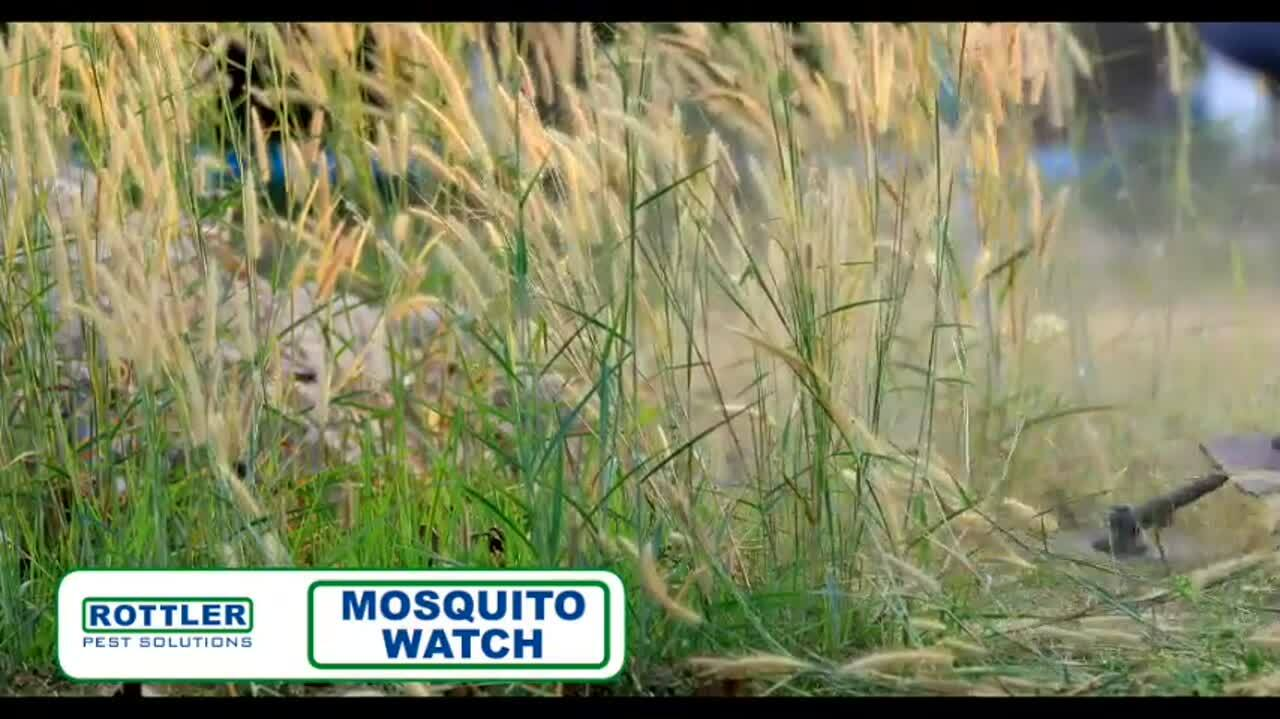 Mosquito Watch 2