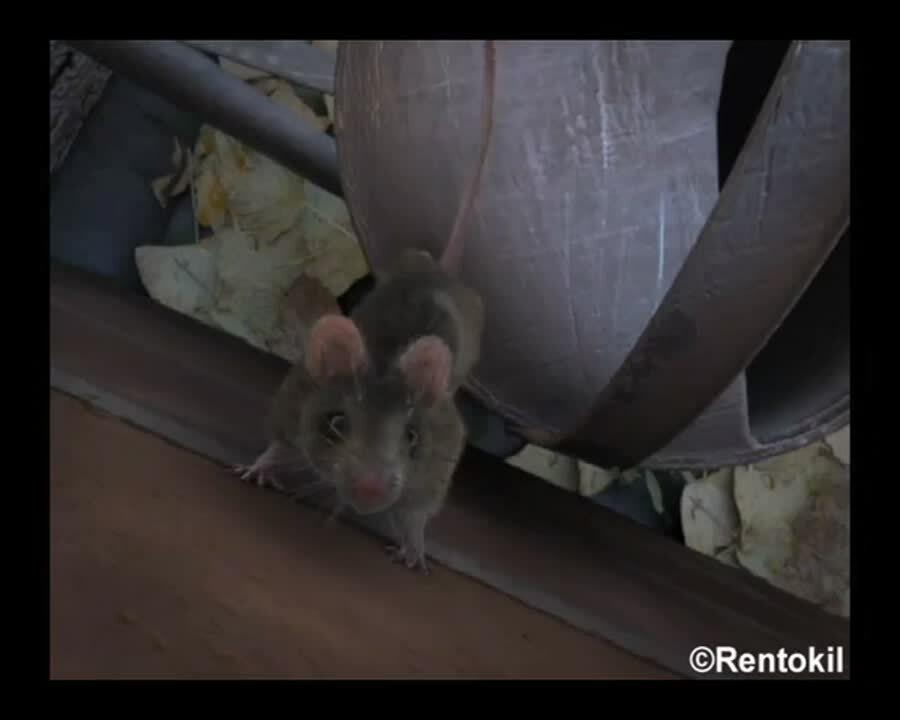 ZA - Rentokil - Video - Scampermouse - Wall climbing