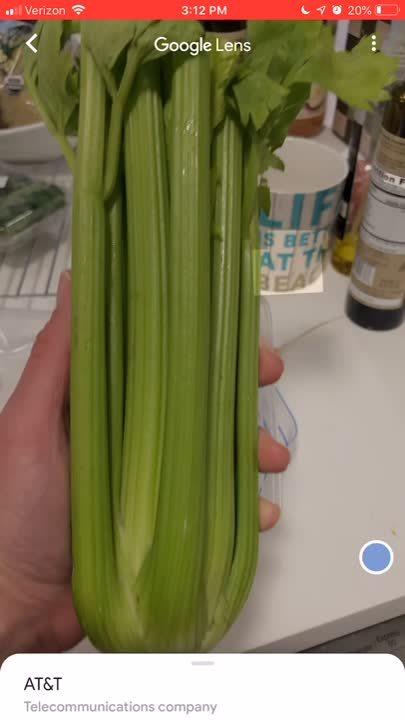 celery master