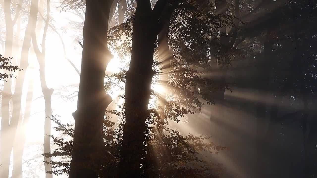 Trees - 30222