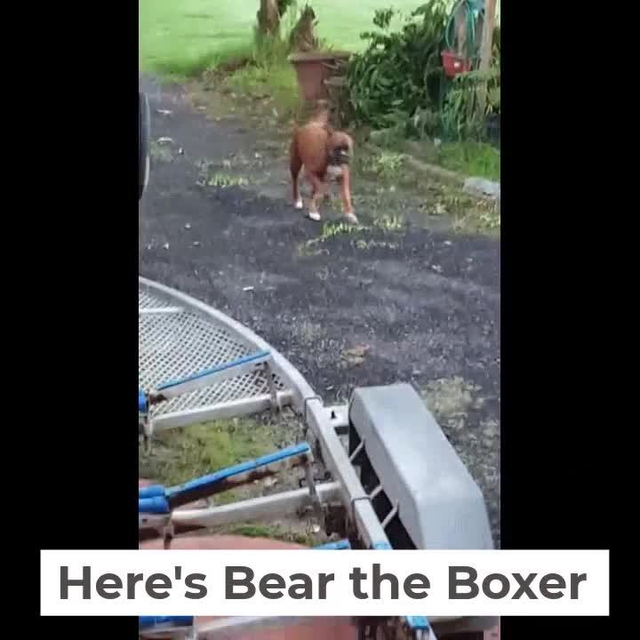 Testimonial Video  Bear the Boxer