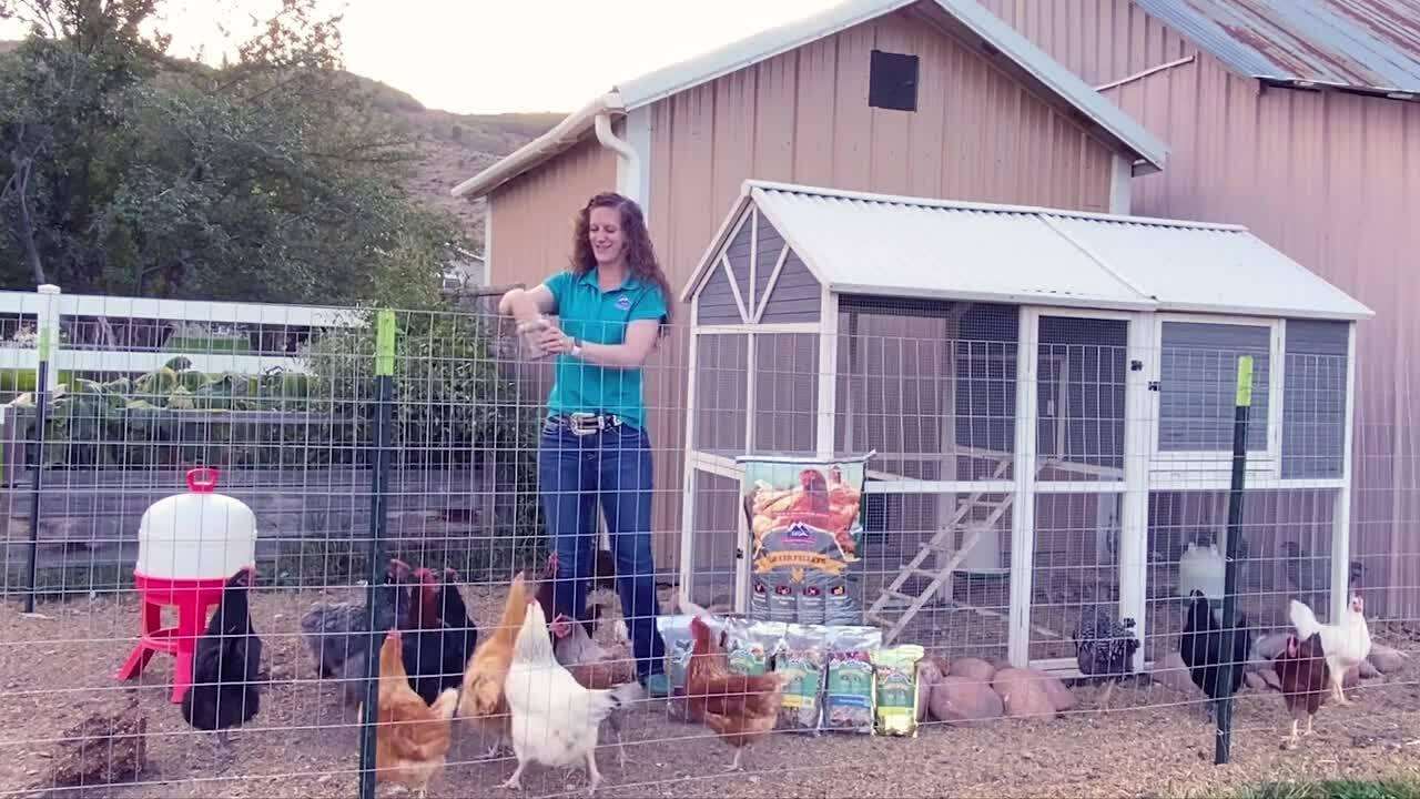 Jill Feeding Poultry Treats20