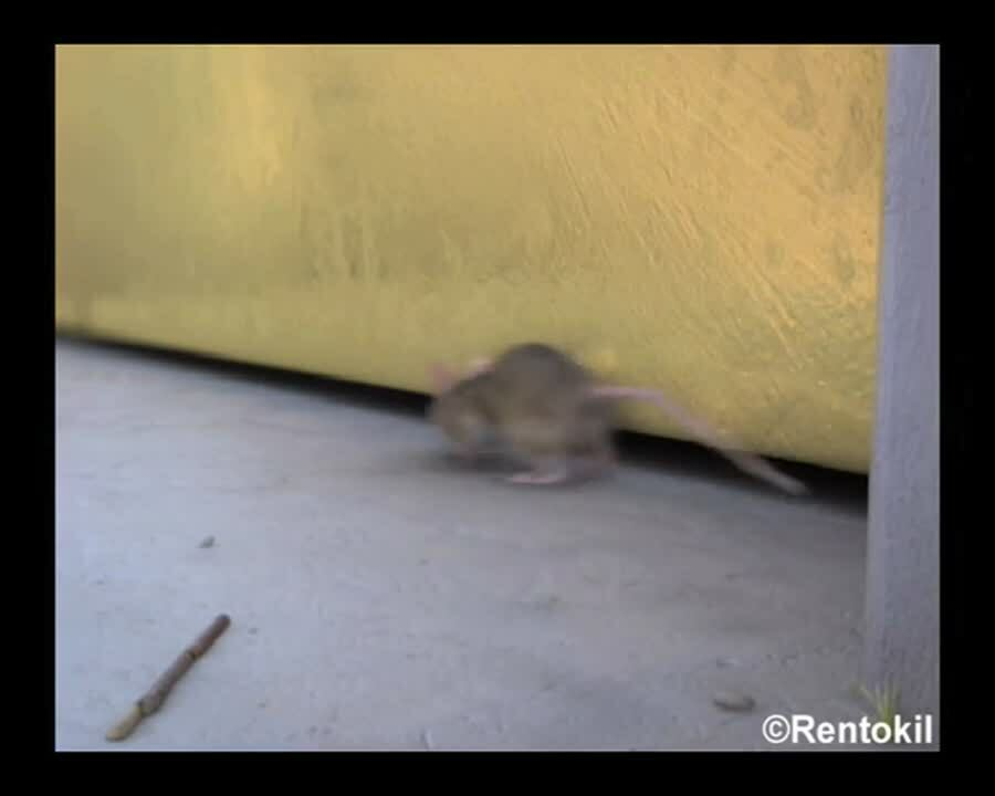 ZA - Rentokil - Video - Scampermouse - Small gaps
