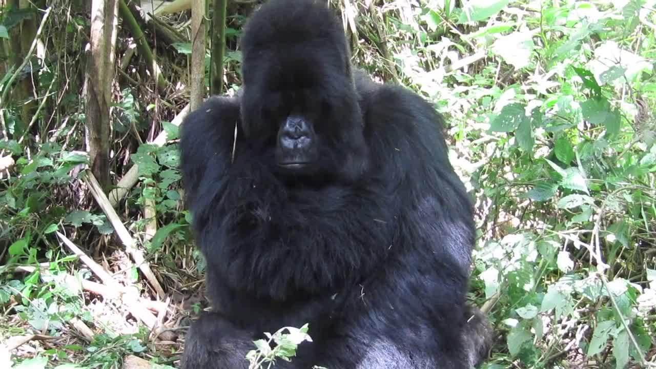 Rwanda December 2018 - Bench -2