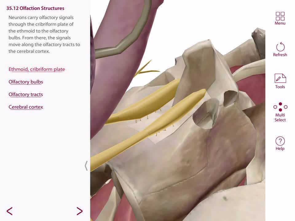3d Ifying Distance Education Courses Using 3d Anatomy In Online Classes