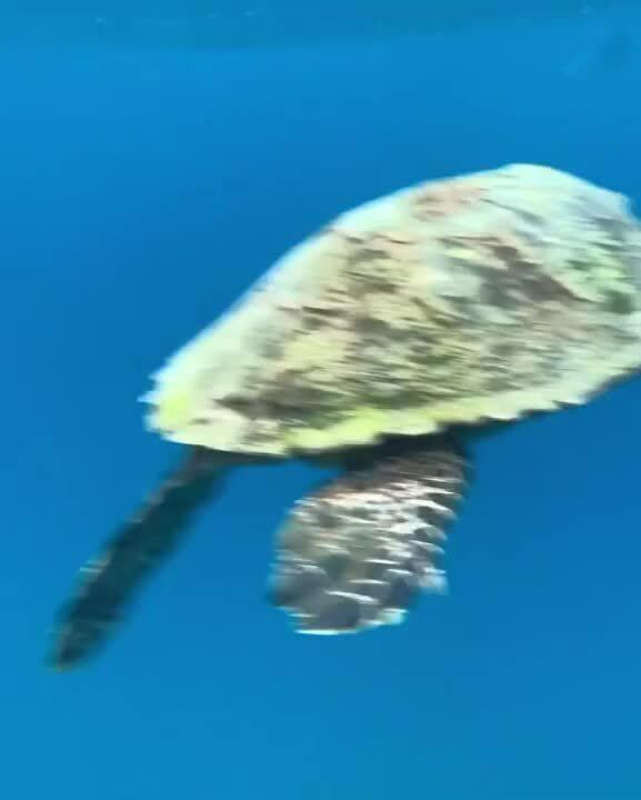 haydenjae_4 sec turtle clip