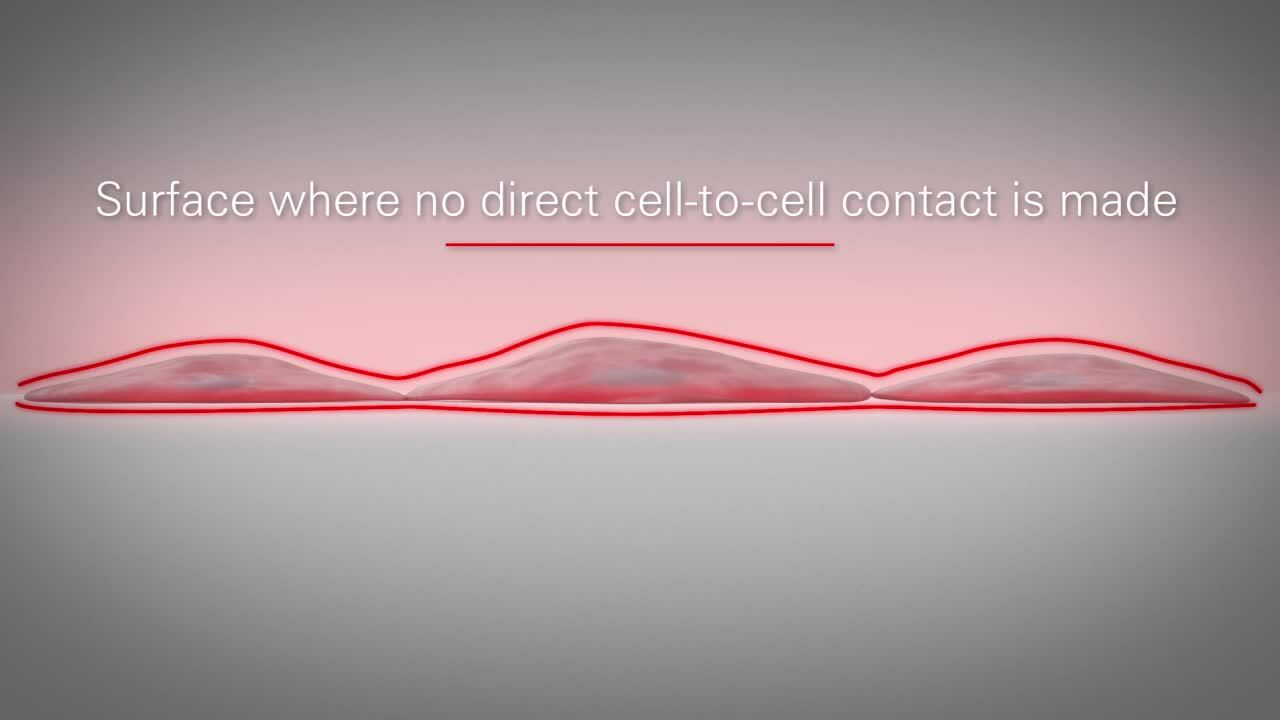 What is REAL 3D Cell Culture