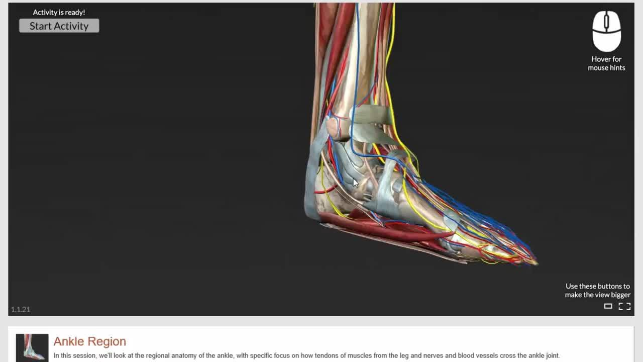 Gale Interactive Human Anatomy