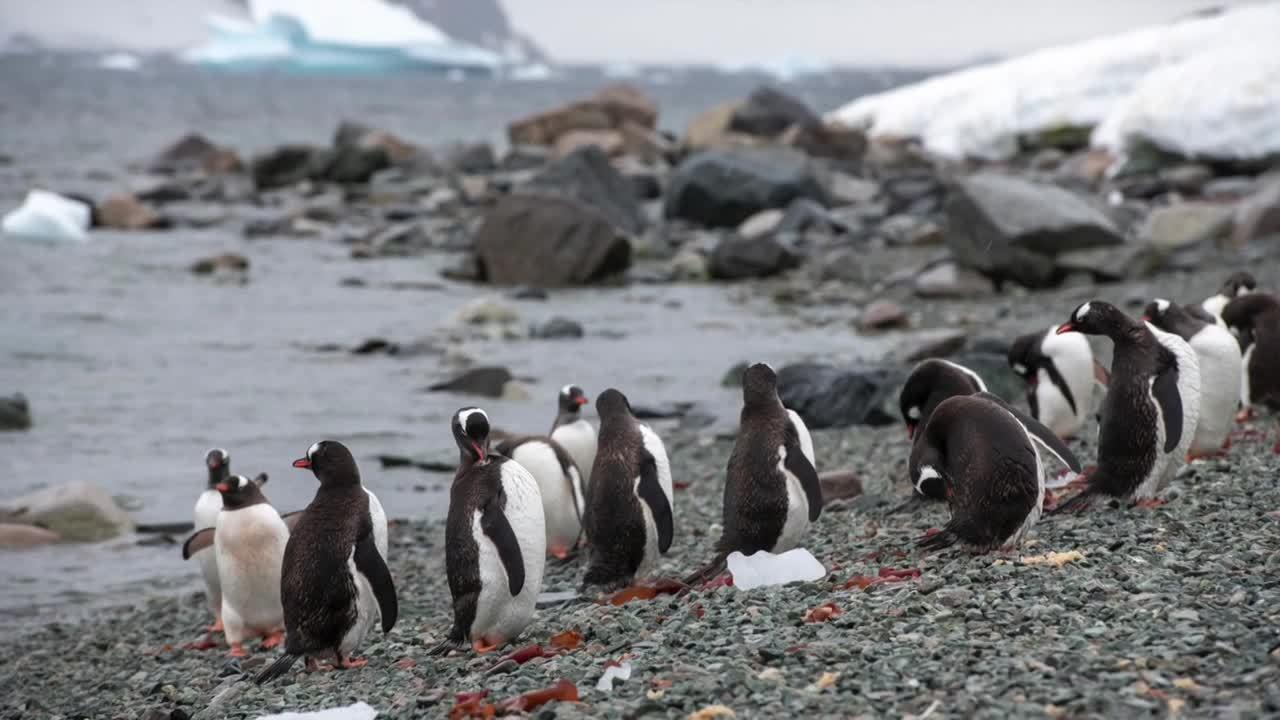 Antarctica 2019 - Danco Island & Neko Harbor