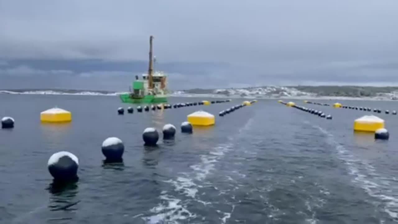 IMG_4262 - Foto Ostrea Aquaculture