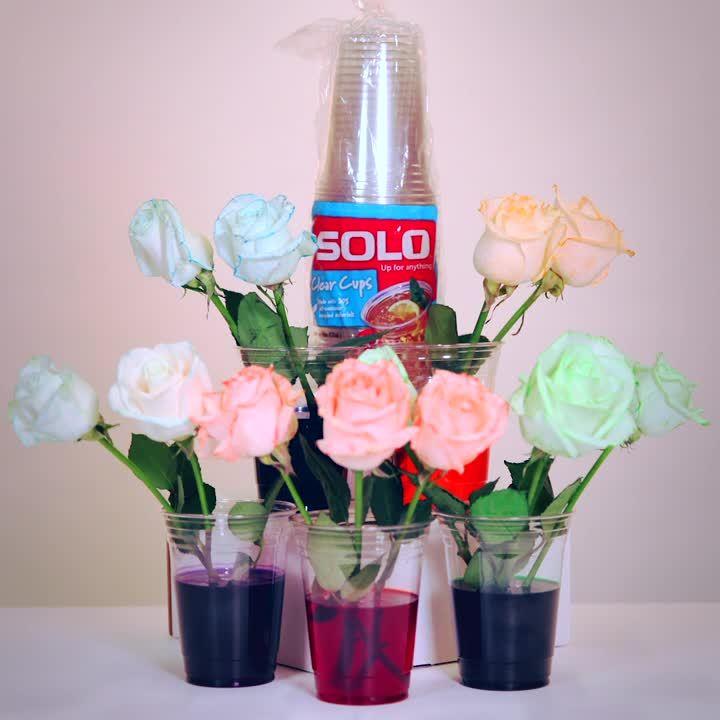SOL35679_Flower_Timelapse_060419