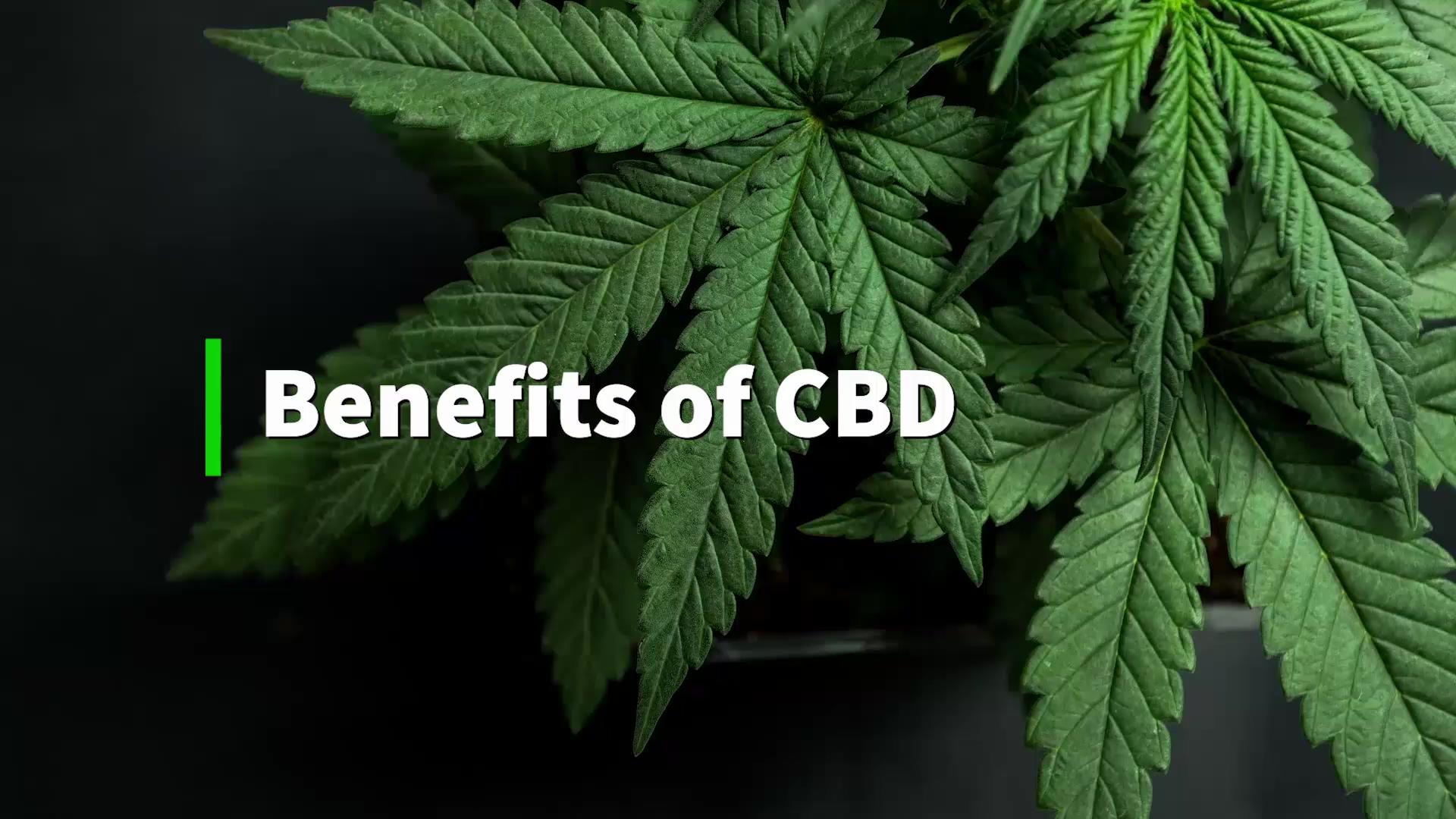 the-benefits-of-cbd
