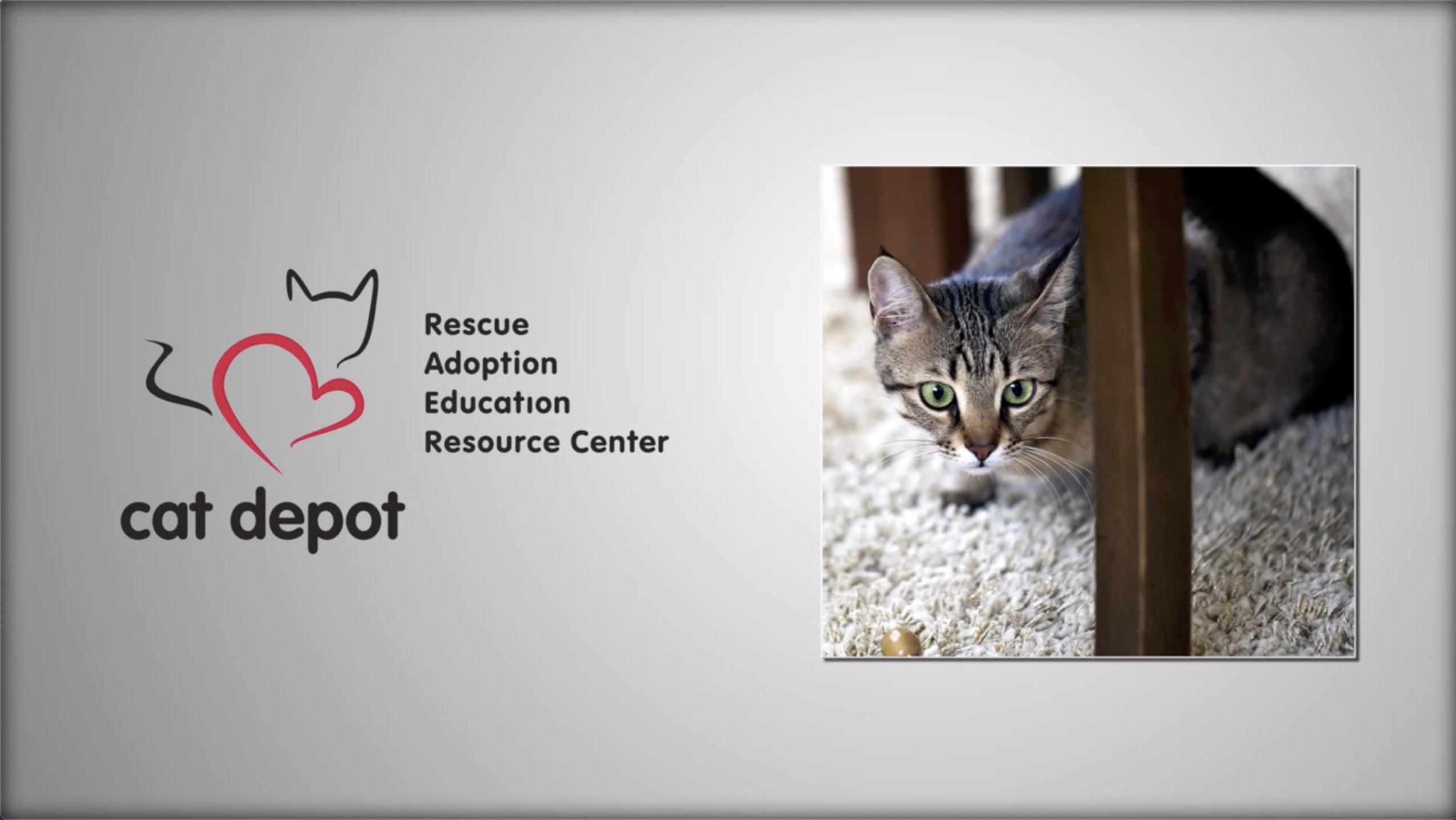 LexJet brandUP Cat Depot