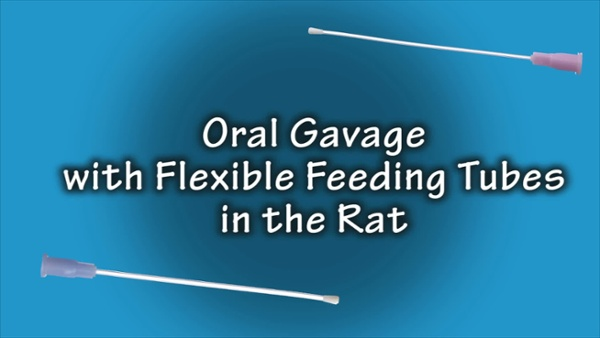 rat-oral-gavage