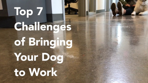 bringing-your-dog-to-work