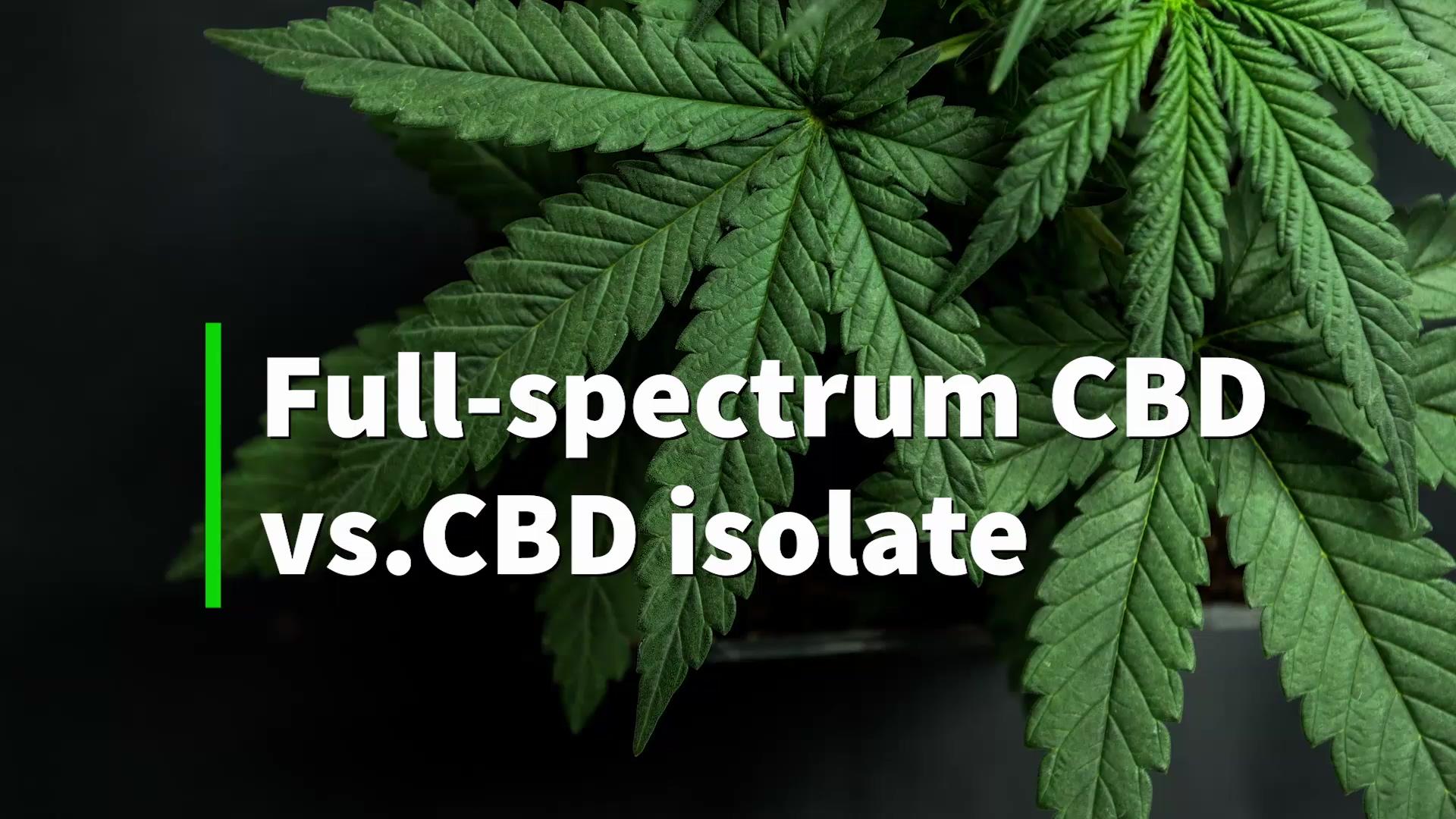 full-spectrum-cbd-vs-cbd-isolate