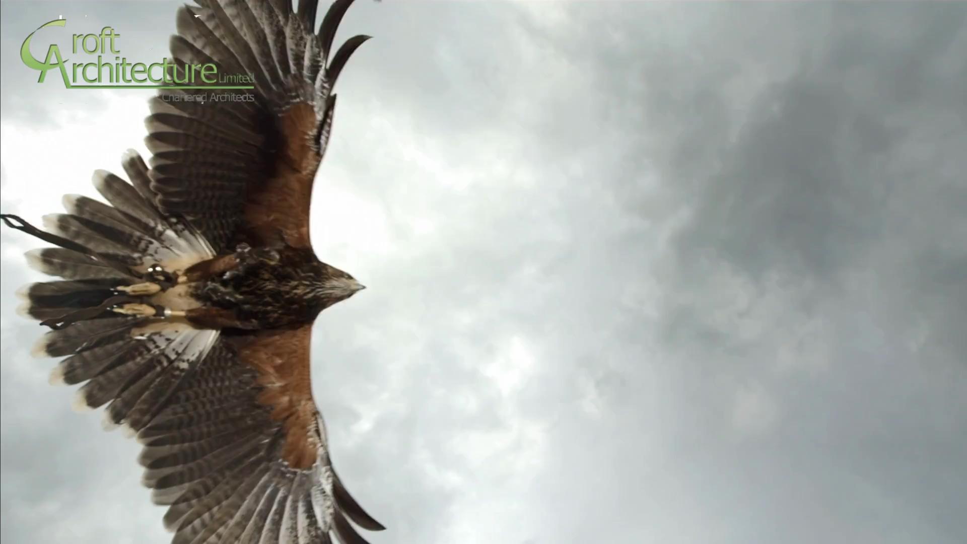 Staffordshire Wildlife _FULL_HD