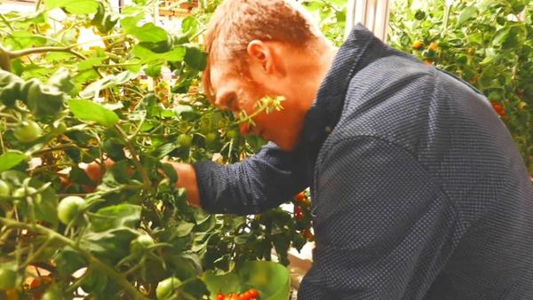 AEssenseGrows Fresh Produce
