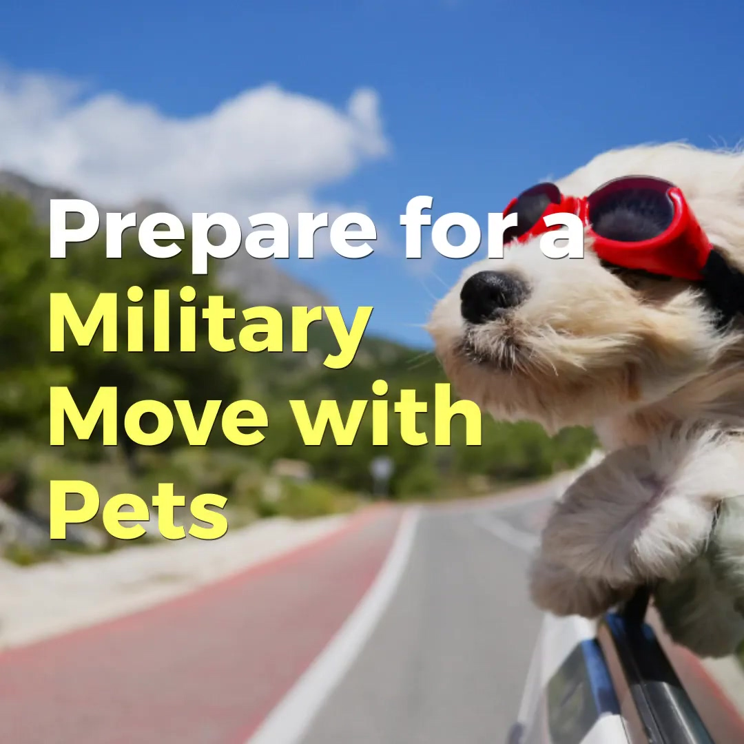 Prepare_for_a_Military_Move_with_Pets