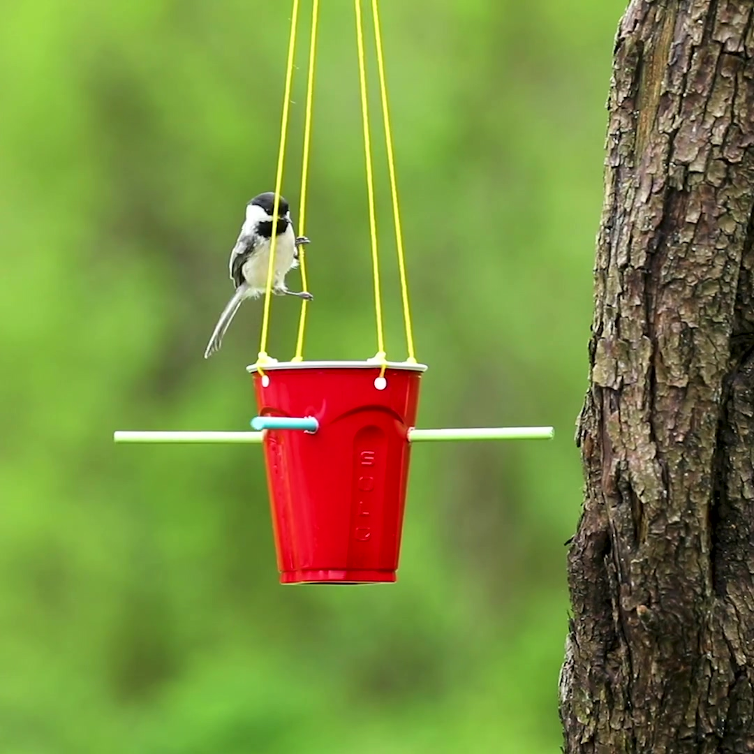 ___SOL_FINAL-COLOR_BIRDFEEDER_053120