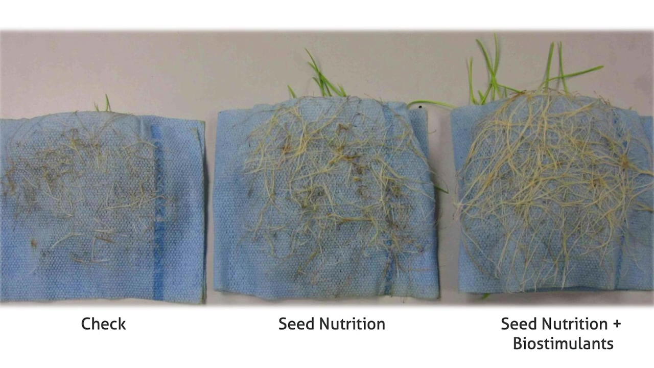 The Importance of Biostimulants and Nutrition at Seeding
